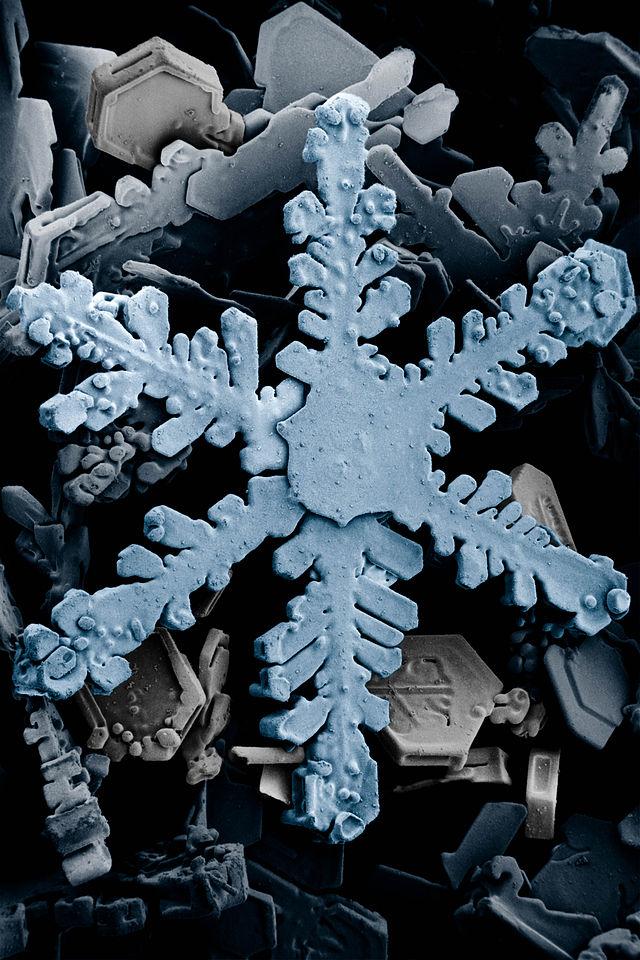 Singolo cristallo di neve in un fiocco, al microscopio elettronico a scansione (Agricultural Research Service/Wikipedia)