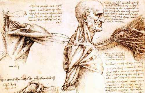 Studio di anatomia (Leonardo da Vinci)